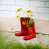Garden utensils Stock Photography