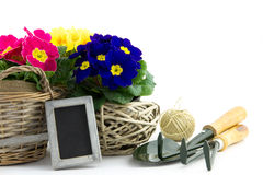 Garden utensils with primroses and small blackboard. Garden utensils with colorful primroses, rope and blackboard isolated royalty free stock photography