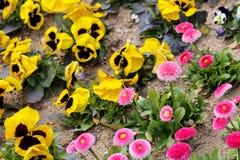 Garden variety Stock Photography