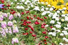Garden variety Royalty Free Stock Photography