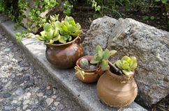 Garden vases with plants with no flowers in the garden Stock Photography