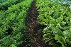 Garden with vegetable beds Stock Photography
