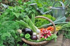Garden vegetable Royalty Free Stock Photography