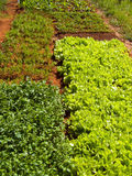 Garden vegetable patch Stock Image