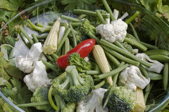 mixed vegetables Stock Images