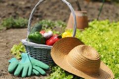 Garden vegetables Stock Photo