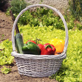 Garden vegetables Stock Image
