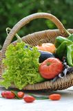 Garden Vegetables Basket Royalty Free Stock Photography