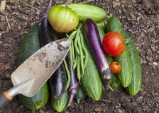 Garden Vegetables Royalty Free Stock Image