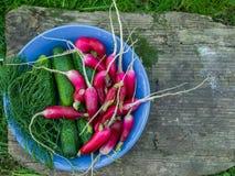 Garden vegetables. Fresh garden vegetables on a wooden desk Stock Image