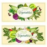 Garden vegetables vector posters, banners Royalty Free Stock Image
