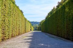 Garden of Versailles Palace. With tall bushes. Paris, France stock images