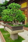 Garden view. Bonsai Stock Photo