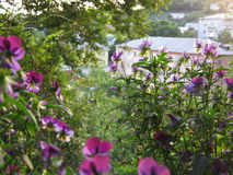 Garden view Royalty Free Stock Photography