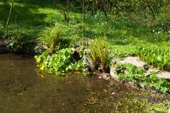 Garden. View of a garden with lake royalty free stock photos