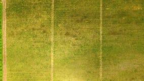 Garden and vineyard in Georgia aerial view, grape plantation, farming business. Stock photo stock photo