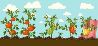 Garden.  Royalty Free Stock Photo
