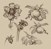 Garden. Vintage pattern. Authors illustration in vector Stock Illustration