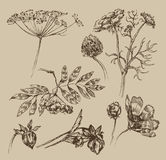 Garden. Vintage pattern. Authors illustration in vector Royalty Free Stock Photography