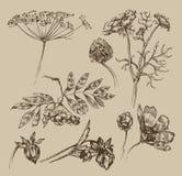 Garden. Vintage pattern. Authors illustration in vector Royalty Free Illustration
