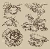 Garden. Vintage pattern. Authors illustration in vector Royalty Free Stock Photos