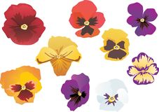 Garden violet flowers collection Stock Image