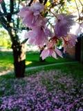 garden walking στοκ φωτογραφία