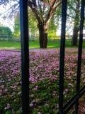 garden walking στοκ φωτογραφίες με δικαίωμα ελεύθερης χρήσης