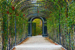 Garden walkway forming agreen tunnel of acacias Stock Images