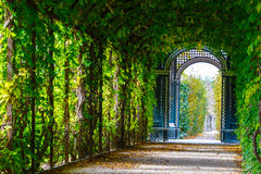 Garden walkway forming agreen tunnel of acacias. Romantic garden walkway forming a green tunnel of acacias at Schonbrunn Palace in Vienna, Austria Royalty Free Stock Photo