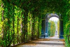Garden walkway forming agreen tunnel of acacias Royalty Free Stock Photo