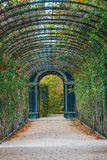 Garden walkway forming a green tunnel of acacias in Vienna. Romantic garden walkway forming a green tunnel of acacias in Vienna, Austria Royalty Free Stock Image