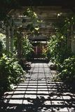 Garden walkway in a grid shadow. Garden walkway in a botanical garden path. Overhead structure casts a grid like shadow on the ground. The way leads away from stock images
