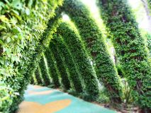 Garden walkway. At the grounds of Gardens By The Bay, a triangular shaped walkway in the midst of a garden Stock Photos