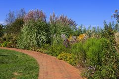 Garden Walkway with Pampas Grass. Brick pavers walkway with pampas and ornamental grasses royalty free stock photo