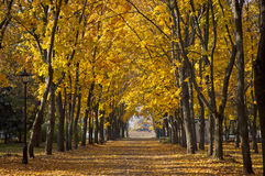 Garden walkway with picturesque autumn trees. Garden walkway with picturesque colorful autumn trees stock photography