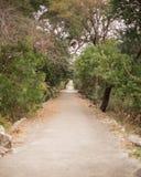 Garden walkway Royalty Free Stock Image