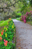 Garden Walkway Vertical Spring Flowers. Vertical image of gravel walking path through garden of spring blooming gladiolas in Charleston, South Carolina Royalty Free Stock Images