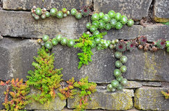 Garden wall Royalty Free Stock Photography