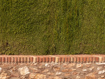 Garden Wall and Green Hedge Royalty Free Stock Image