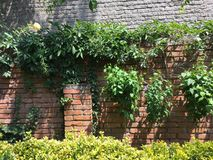 Garden wall. With hibiscus and rose Stock Image