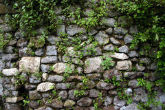 Garden Wall at Ninfa, near Rome. This wall is part of the ruins dating back to the 12th century of the Garden at Ninfa, on the outskirts of Rome. Plants and Royalty Free Stock Images
