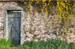 Garden wall with vegetation. Vegetation on a stone wall of a garden with tatty wooden door Royalty Free Stock Photography