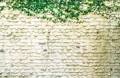 Garden Wall Stock Photo