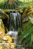 Garden waterfall. A small waterfall in a garden surrounded by ferns and moss royalty free stock image