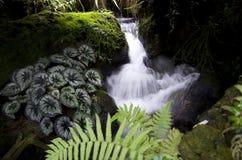 Garden waterfall Royalty Free Stock Photos