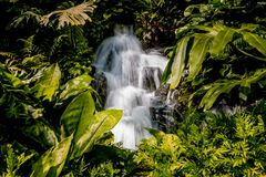 Garden waterfall in singapore surrounded with leaves stock photo