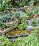 Garden waterfall among tropical green foliage Stock Images
