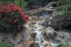 Garden with waterfalls royalty free stock photos