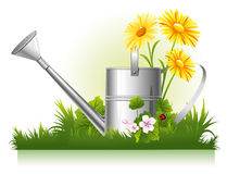 Garden watering. And daisies in the grass Royalty Free Stock Photo